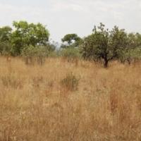 Smallholdings: Vaccand Land in Honingnestkrans, 21 ha