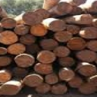 treated and untreated Gum Polls for sale