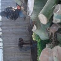 Tree felling & Site opening 0737420067