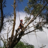 CM TREE FELLING AND GARDEN SERVICE