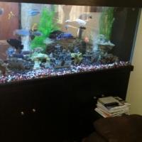 Fish tank 860 litre