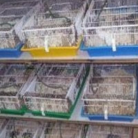 Rat and mice breeding cages