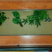 Reptile cage for sale, not using it anymore