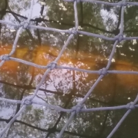 16 Large Koi & Equipment for sale