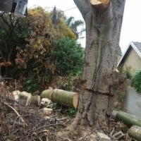 tree felling and garden savices