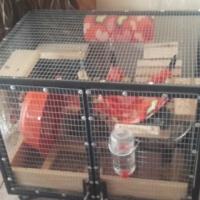 Chinchilla cage for sale.