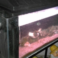 3ft marine tank for sale