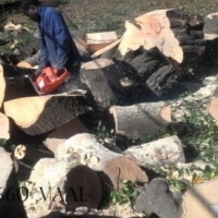 Tree felling services at affordable rates 0607521660