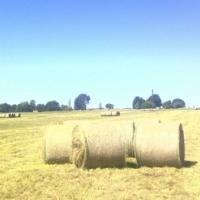 Groen Oulandsgras