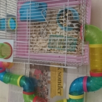 Mouse cage