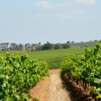 30HA FARM FOR SALE IN STELLENBOSCH