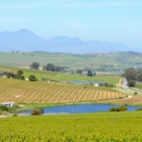 15HA FARM FOR SALE IN STELLENBOSCH