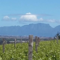 77HA FARM FOR SALE IN SOMERSET WEST