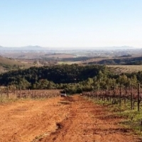 70HA FARM FOR SALE IN STELLENBOSCH