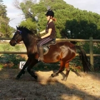 Show/eventing pony for sale