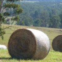 5x4bales of Oaten/vetch Hay