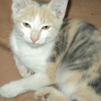 1 Kitten left for sale