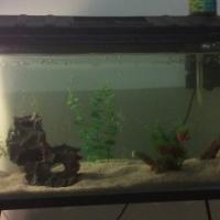 3 ft tank complete setup