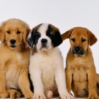 Puppy Day Care for Sale, Tableview