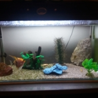 60 litre fish tank with extras