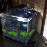 Custom Build Acrylic Aquariums