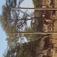 1860 Hektare Game Farm Thabazimbi