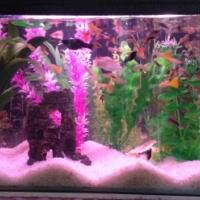2 Complete Aquariums for sale