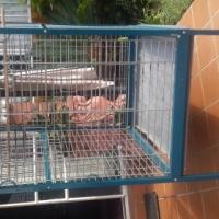 Huge parrot cage on wheels