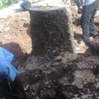 stumps removal Port Elizabeth