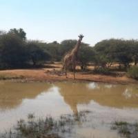 EMACPLAN PROPERTIES. Bushveld Game Farm