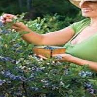 Berry plants- Blueberry, blackberry, goji berry, raspberries, currents, etc.