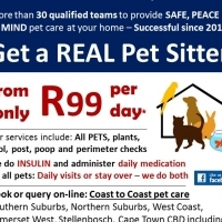 Pet Sitting, Daily walks, Feeds & Day/Night home-sitting