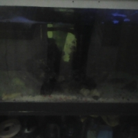 2xfish tanks