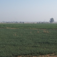 425ha farm in the Potchefstroom area
