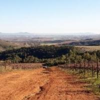 70HA FARM FOR SALE IN STELLENBOSCH