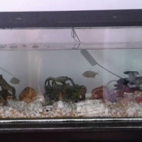 Fish tank with fish and acc.