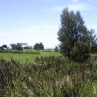 Land For Sale ! Bordering The Tsitsikamma Stormsriver Mouth National Park !