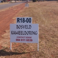 Used, Kameeldoring for sale  South Africa