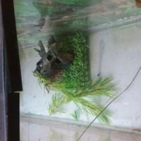1.2m Fish tank