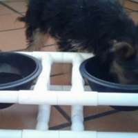Dog Bowl Holders