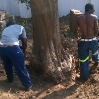 Treefelling