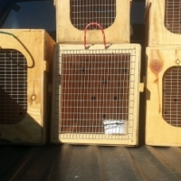 Airline approved pet travel crates