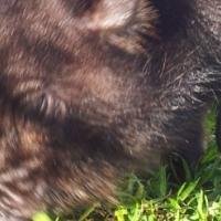 Mini Teacup Piggy's - Only 5 black ones left