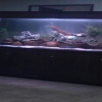 complete fish tank with fish and equipment
