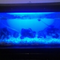 Fish tank with fish and acc