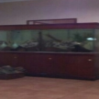 big tropical fish tank