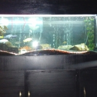 5ft fish tank with canopy and cabinet