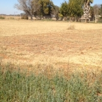 Beautifull farm for sale limpopo , Excellent farming Opportunity.