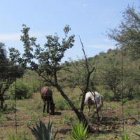 NABOOMSPRUIT 32ha bushveld farm