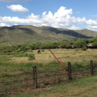 TIMESHARE BAKUBUNG GAME LODGE IN THE PILANSBERG
